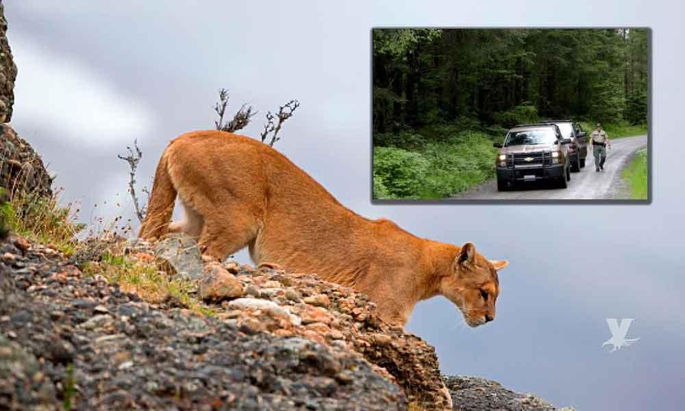 Puma asesinó a un ciclista y otro quedó mal herido mientras realizaban un paseo por la montaña