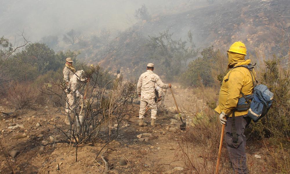 Liquidan incendio forestal en Parque Nacional Sierra de San Pedro Mártir