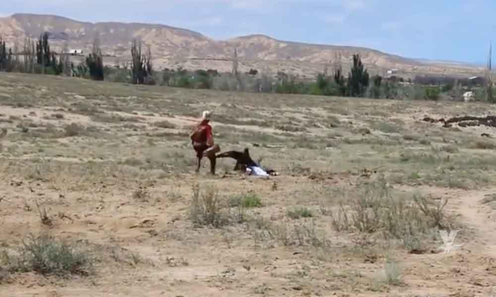 (VIDEO) Aguila Real ataca a niña al confundirla con una presa durante una exhibición