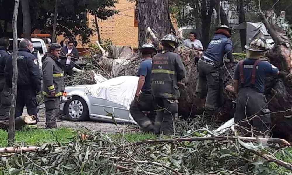 ¡Tragedia! Gigantesco árbol cae sobre automóvil y mata a cuatro integrantes de una familia