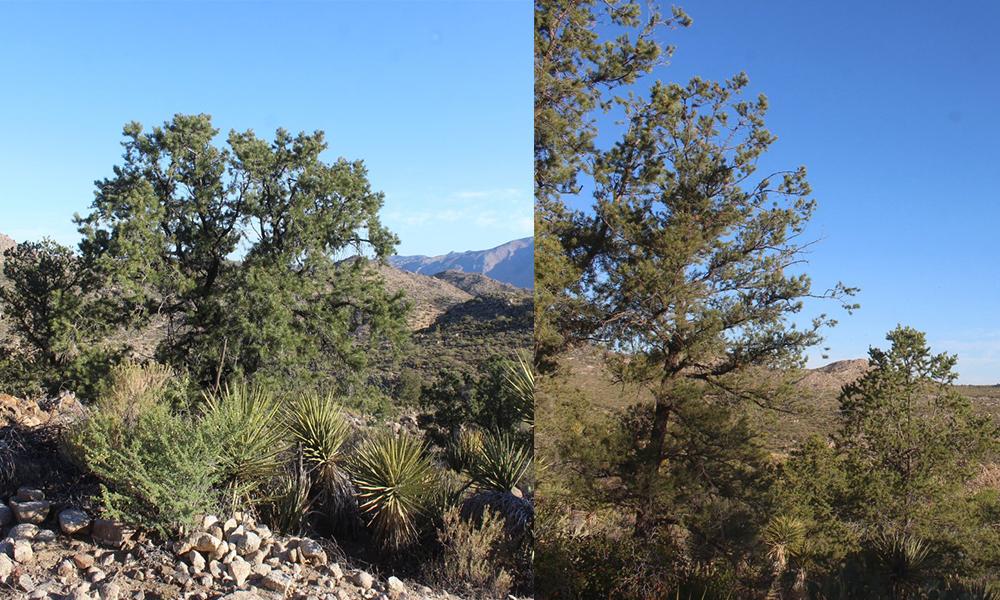 Asignan 12 mdp para conservación ambiental de las sierras de Juárez y San Pedro Mártir en Baja California