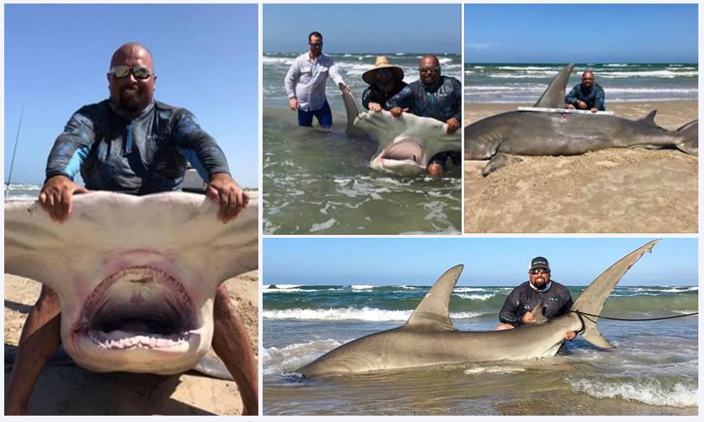 ¡Impresionante! Atrapan a un tiburón martillo de más de 4 metros en el Golfo de México