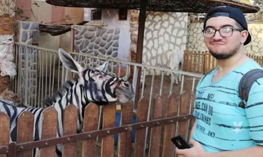 Zoológico pinta burros de cebra al estilo tijuanense, es demandado por estafa