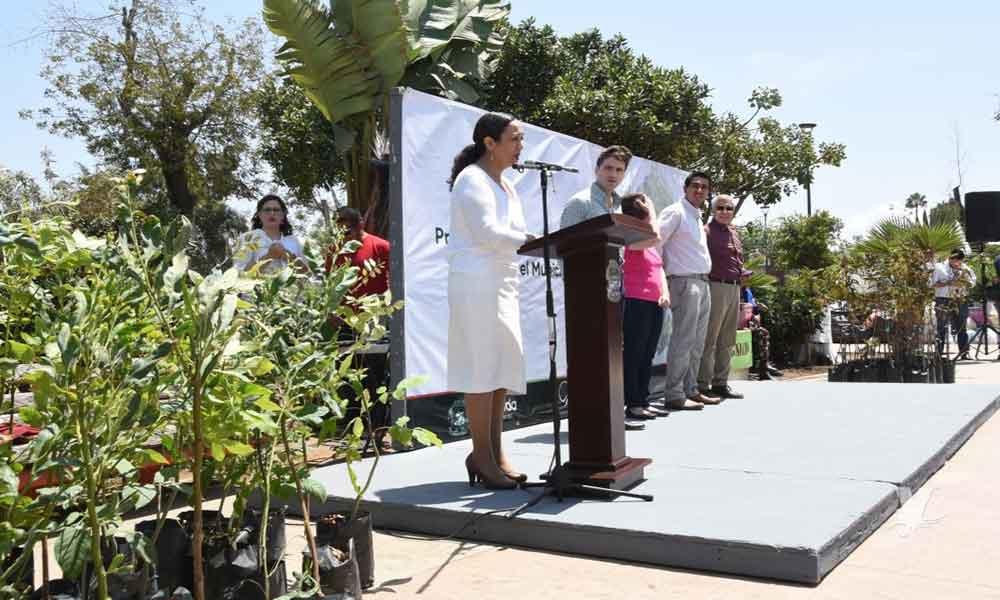 Conmemoran el Día del Árbol en Ensenada