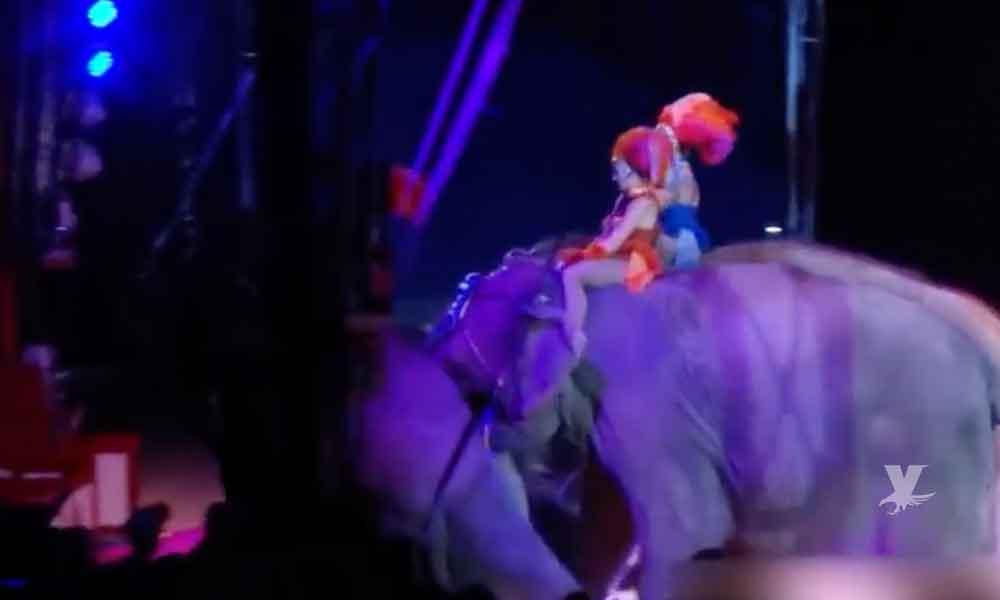 (VIDEO) Elefante cae sobre el público durante una presentación en un circo
