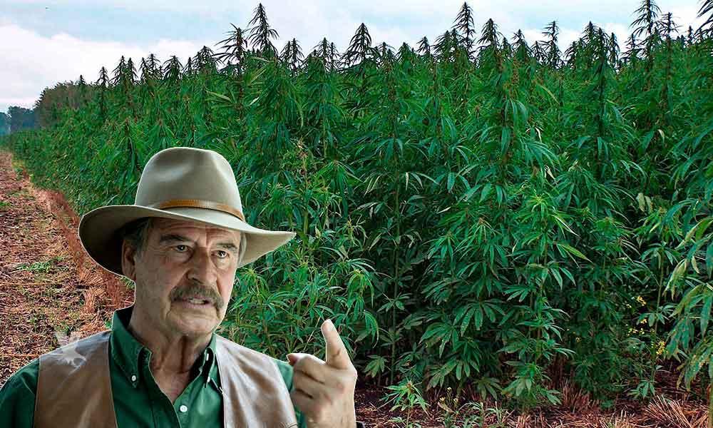 Empresa de Canada dedicada al cannabis contrató a Vicente Fox
