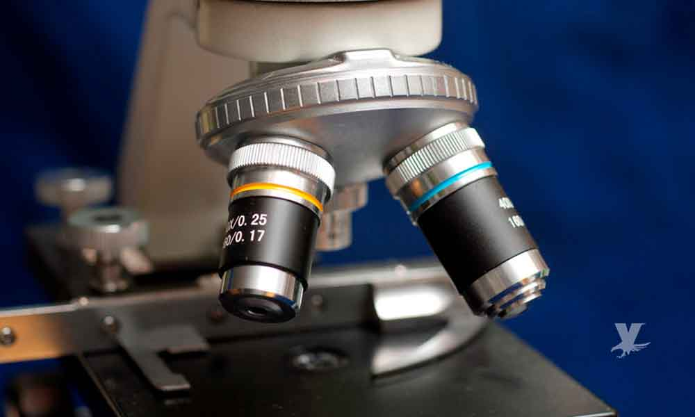 Identifican gen clave en la respuesta inmunológica del cuerpo