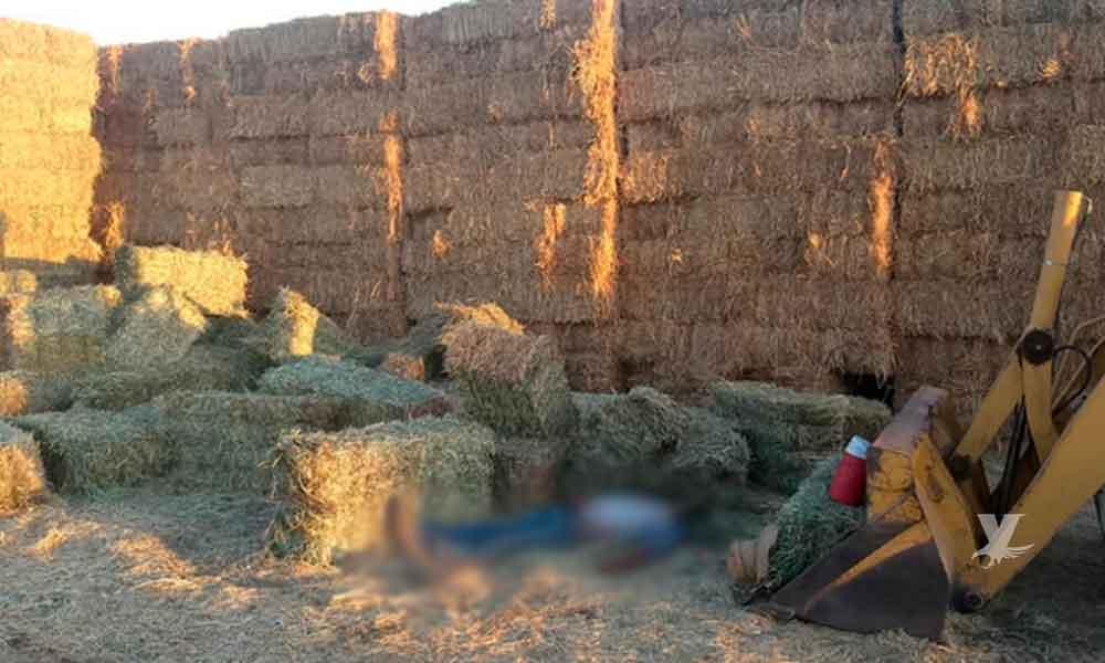 Trabajador pierde la vida al ser aplastado por pacas de pastura en Mexicali