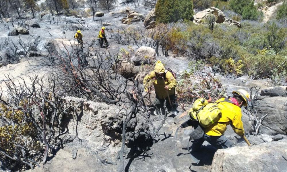 Liquidan incendio en Sierra de San Pedro Mártir: CONAFOR