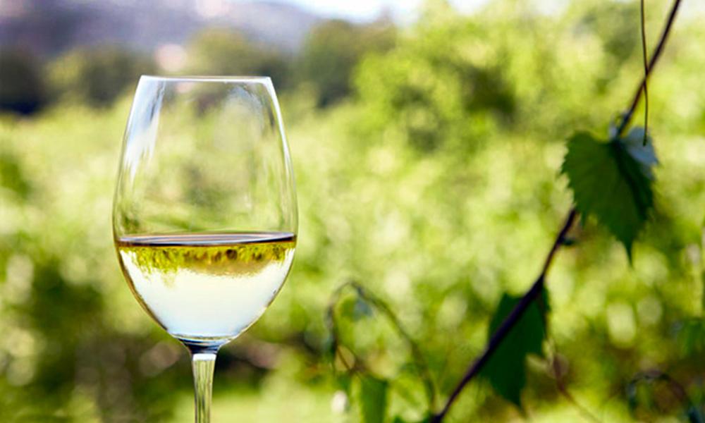 Invitan al festival del vino blanco en la ruta del vino en Ensenada