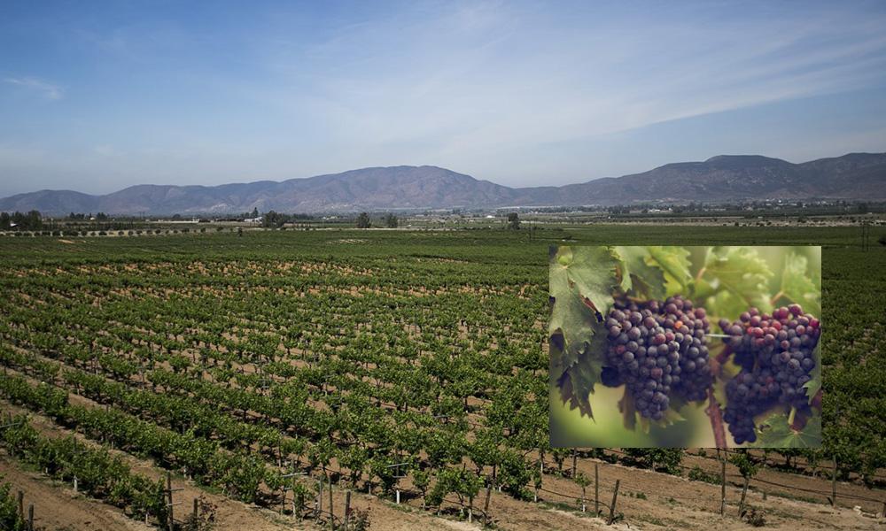 Invitan a visitar la Puerta Norte de la Ruta del Vino en Tecate