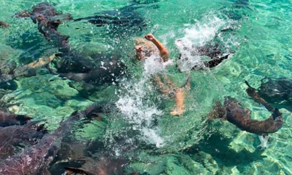 Modelo es atacada por tiburones mientras realizaba sesión fotográfica