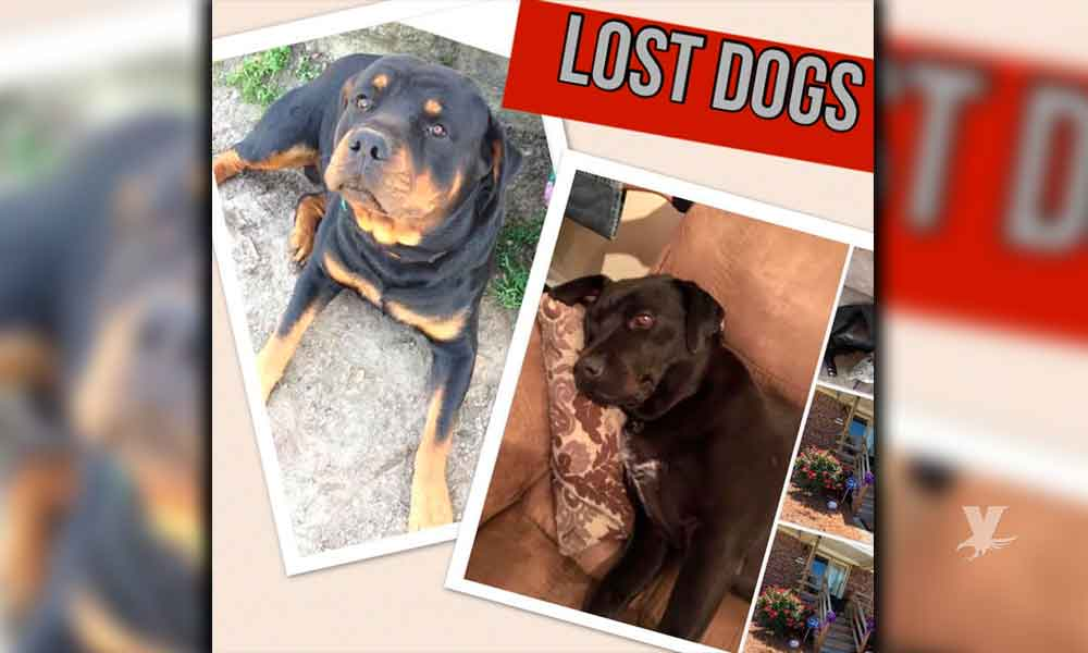 Perros robados en California están siendo recuperados en Rosarito