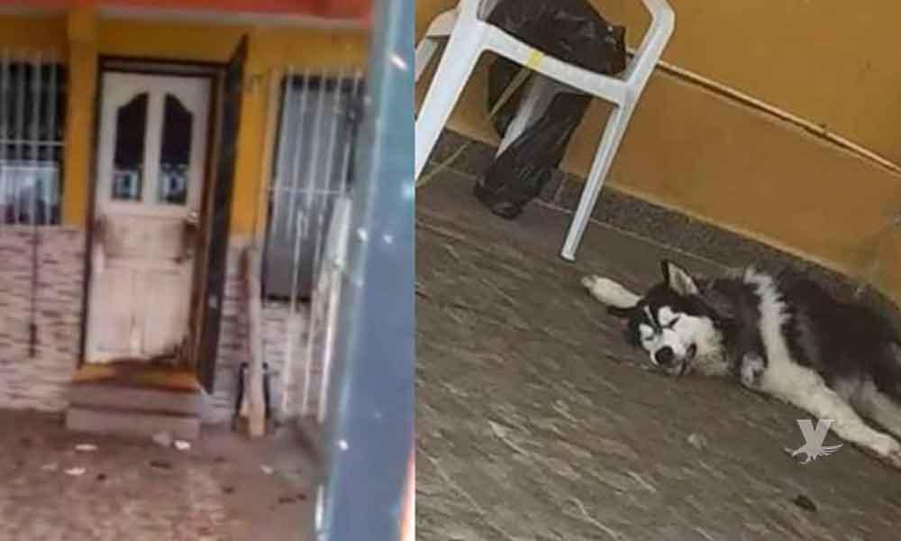 Tres perros mueren de sed en Yucatán luego de que sus dueños se fueron de vacaciones