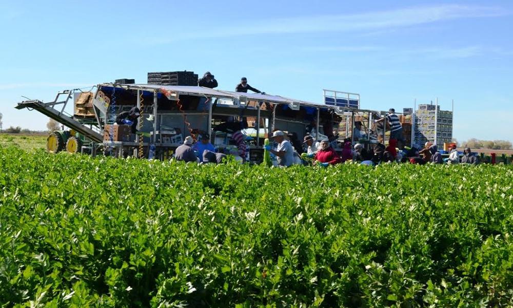 Reciben atención médica jornaleros agrícolas en unidades móviles del IMSS en Baja California