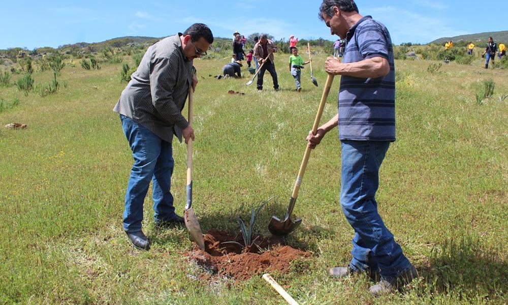 Reforestarán con medio millón de plantas nativas zonas de Baja California