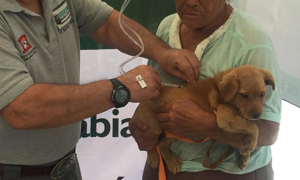 Refuerzan vacunación antirrábica canina y felina en Ensenada