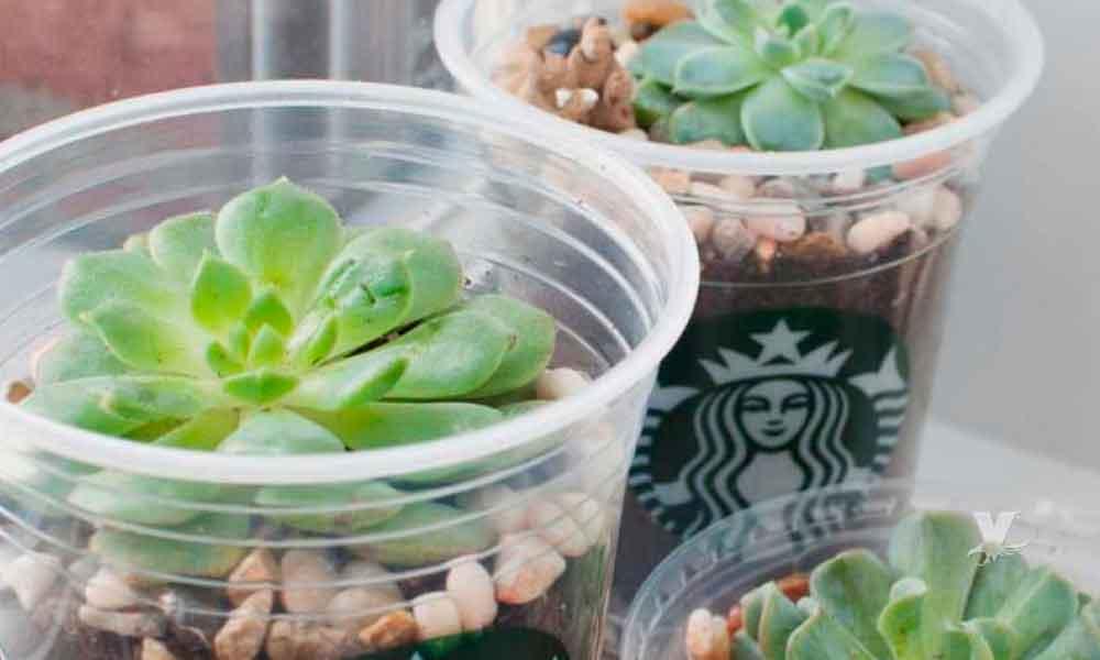 Starbucks pagará 189 millones de pesos a la persona que diseñe vasos ecológicos amigable con el medio ambiente