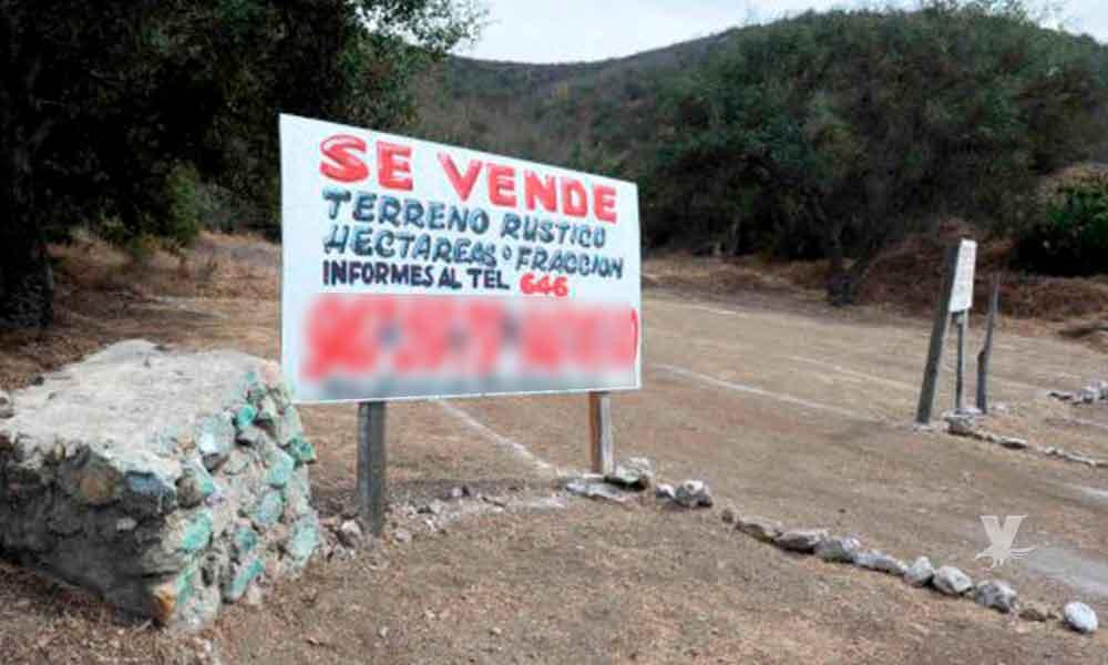 Aumenta el número de estafas con terrenos en Ruta del Vino