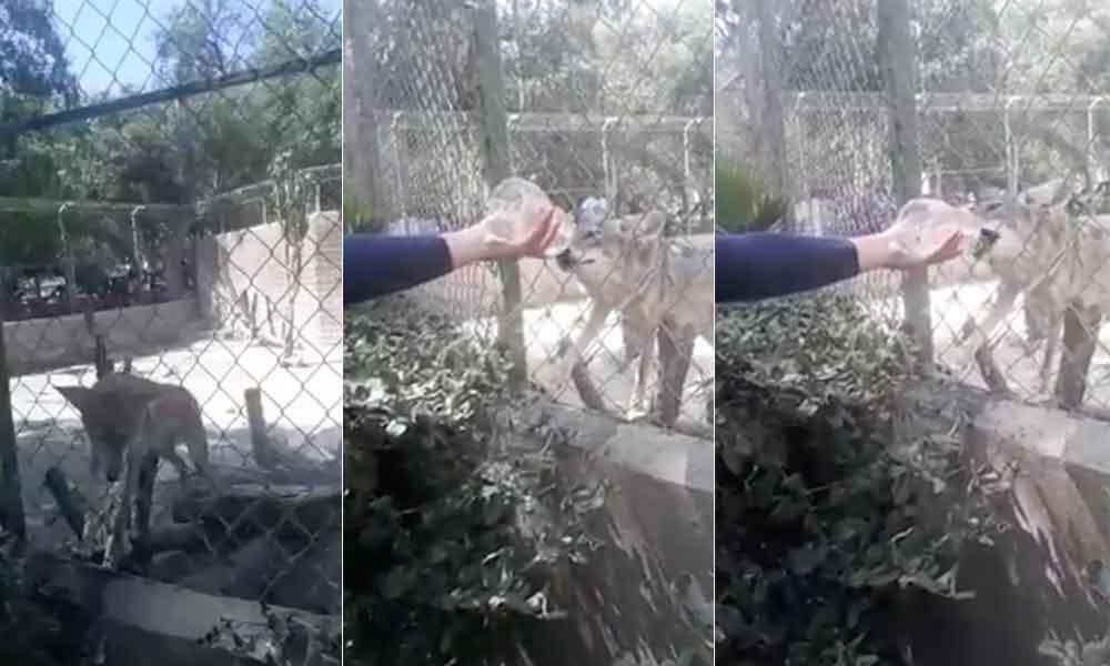 Ciudadanos denuncian presunto maltrato animal en Parque Morelos