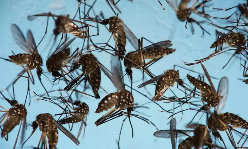 ¡Cuidado! Éste mosquito podría matar a tu familia