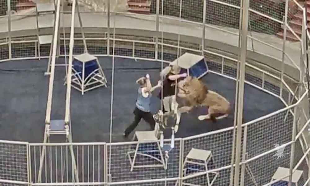 (VIDEO) Domador es atacado por un león al finalizar su acto circense
