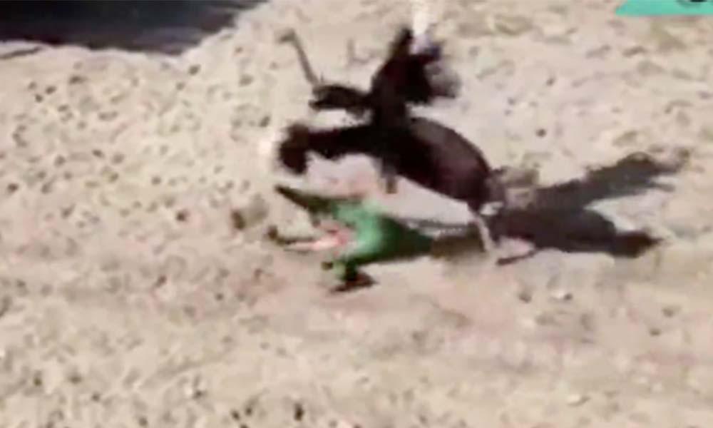 Avestruz celosa propina tremenda golpiza a cuidador (VIDEO)