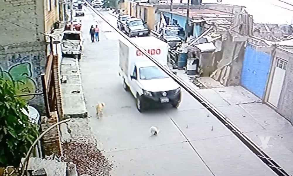 (VIDEO) ¡Indignante! Empleado de Bimbo atropellando a un perro y se va del lugar