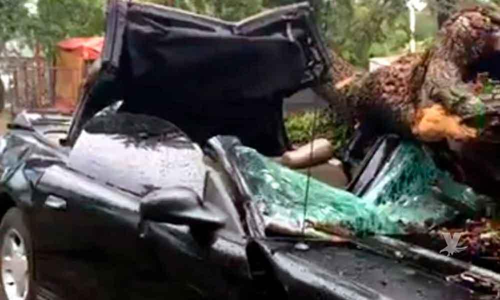 ¡Nuevamente! Tormenta derriba un árbol y cae sobre un carro, dejando al conductor prensado