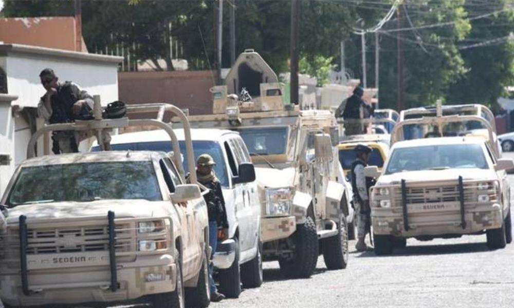 Catean federales dos domicilios y aseguran 163 gallos de pelea en Mexicali