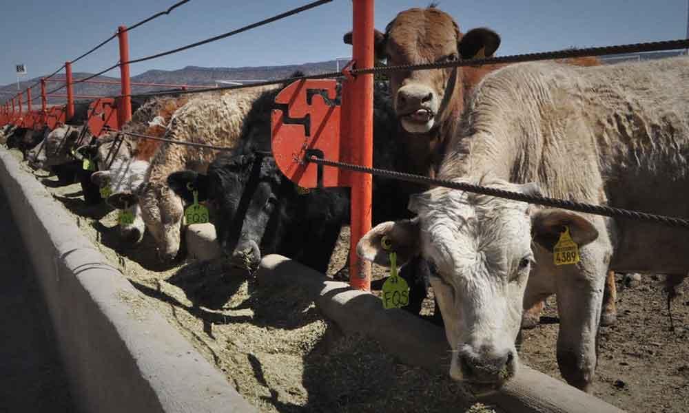 Tecate se colocaría como centro estratégico para la exportación de carne hacia Estados Unidos