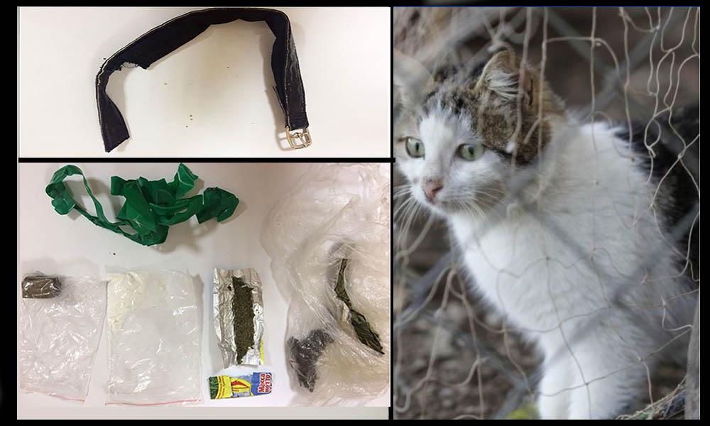 "Detienen a gato ""narcotraficante"" que ingresaba drogas a prisión"