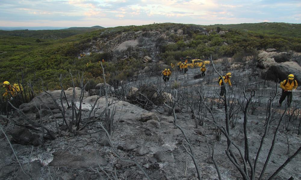 Disminuye la superficie afectada por incendios forestales en Baja California