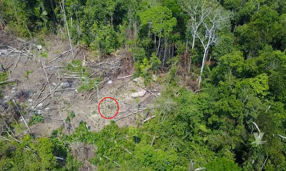 (VIDEO) Dron graba a tribu que se esconde en las profundidades del Amazonas en Brasil