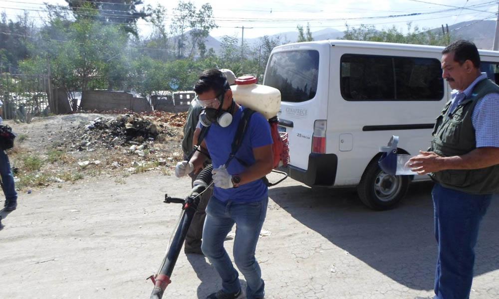 Exhortan a los dueños de mascotas a prevenir la rickettsia en Tijuana