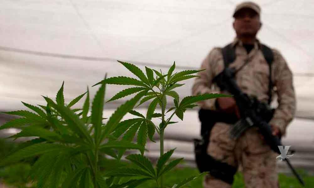 México legalizará la marihuana entrando el sexenio de AMLO