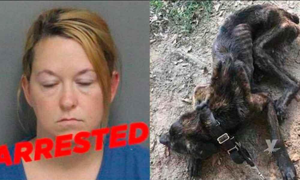 Mujer se negó a alimentar al perro de su ex novio por venganza y es detenida por maltrato animal