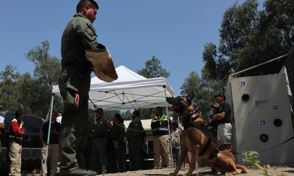 Realizan Seminario de Internacional de Unidades Caninas en Tijuana