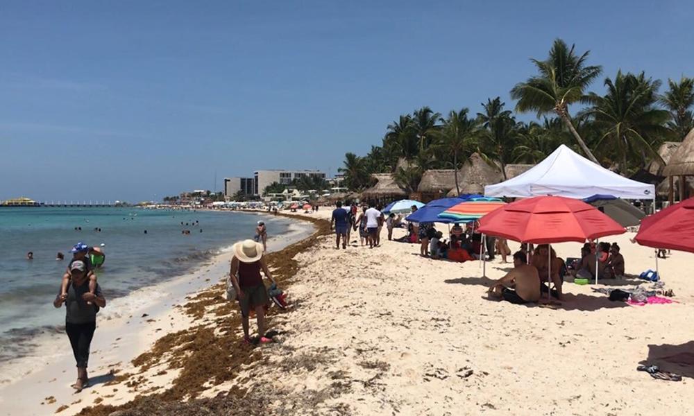 Sargazo, nuevo peligro ecológico y económico para playas mexicanas