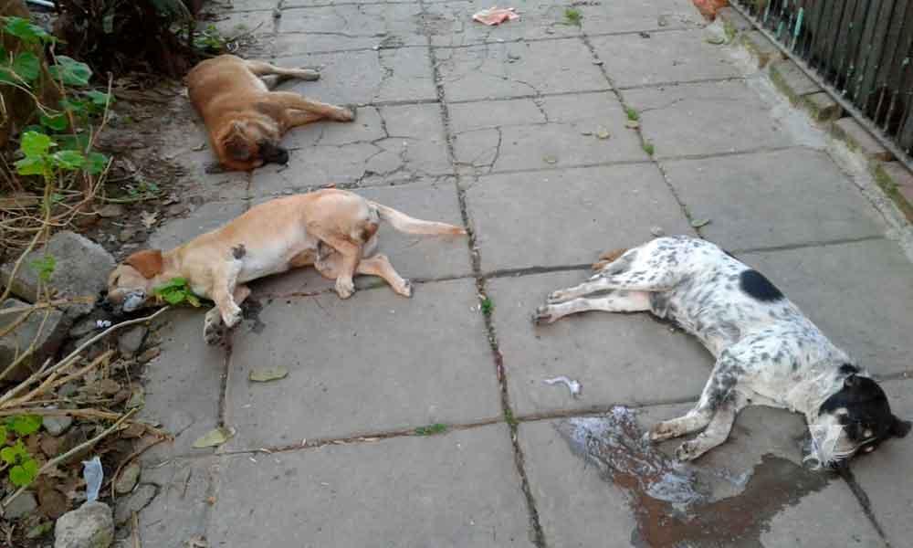 Vecinos molestos asesinaron a joven que presuntamente enveneno a sus perros