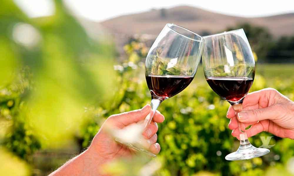 Invitan a conocer los viñedos de la Antigua Ruta del Vino