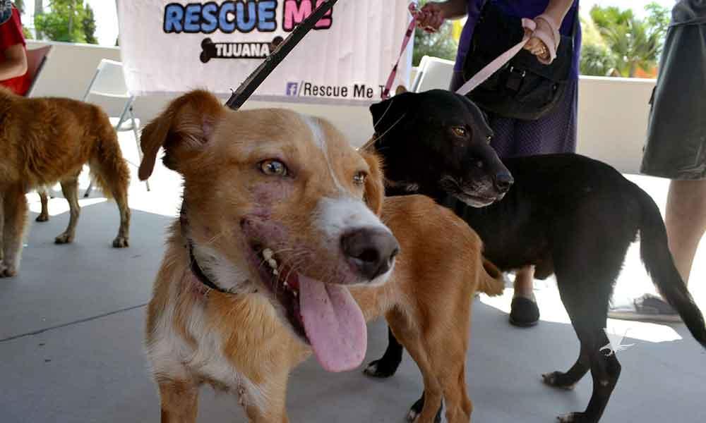 Voluntarios logran adopción de mascotas en Tijuana