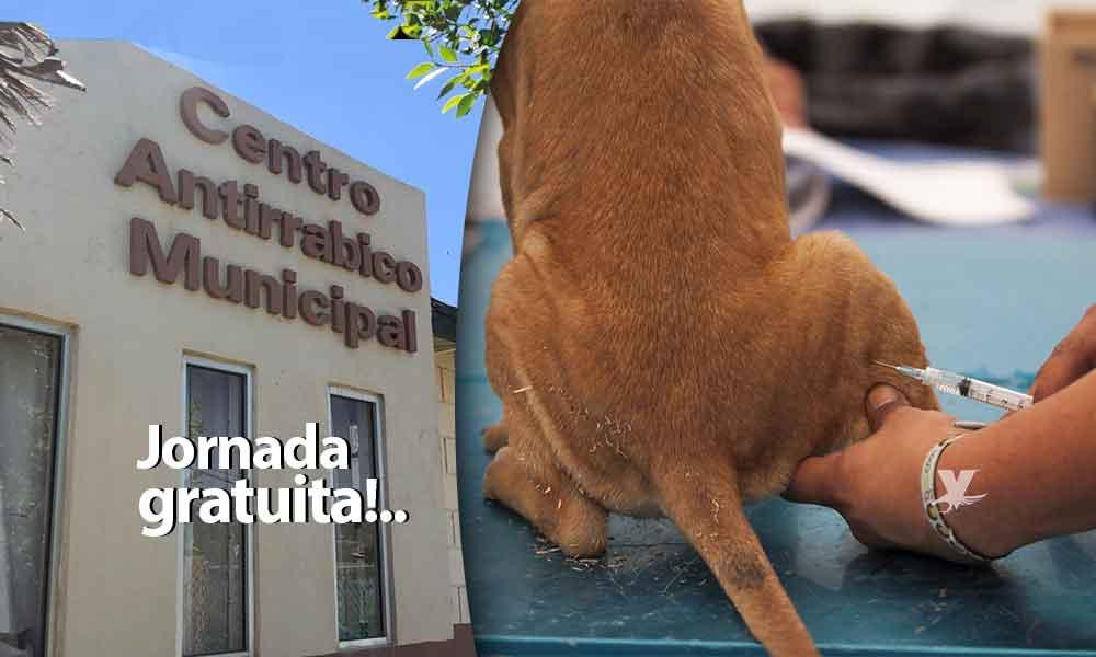 Se lleva a cabo campaña de esterilización para perros y gatos totalmente gratuita