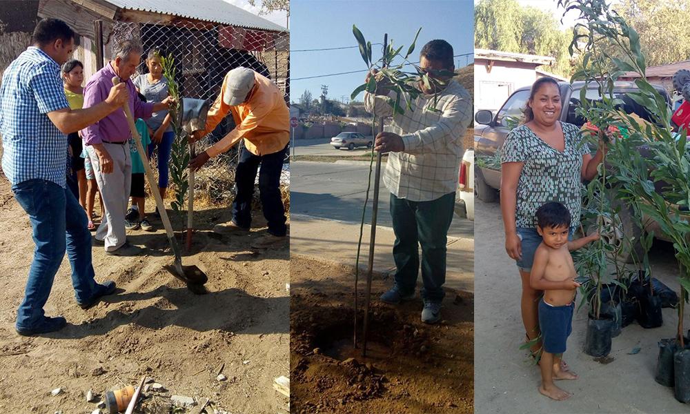 Realizan jornada de reforestación en Tecate