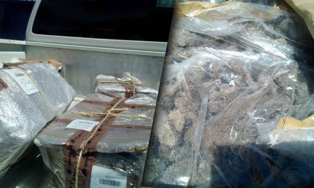 Aseguran 113 kilos de pepino de mar ilegal en el Aeropuerto Internacional de Tijuana
