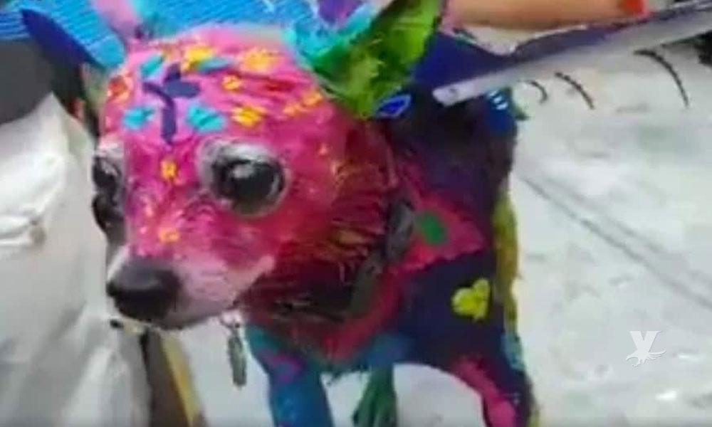 (VIDEO) Mujer pinta de alebrije a su perro chihuahua y es acusada de maltrato animal