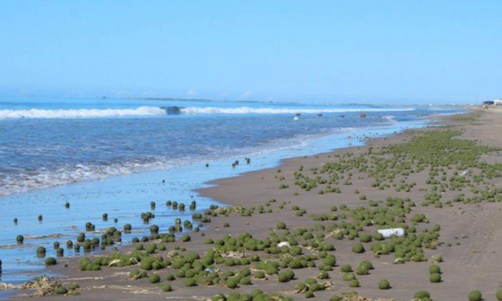 """Invaden misteriosas """"bolas"""" a playa mexicana"""