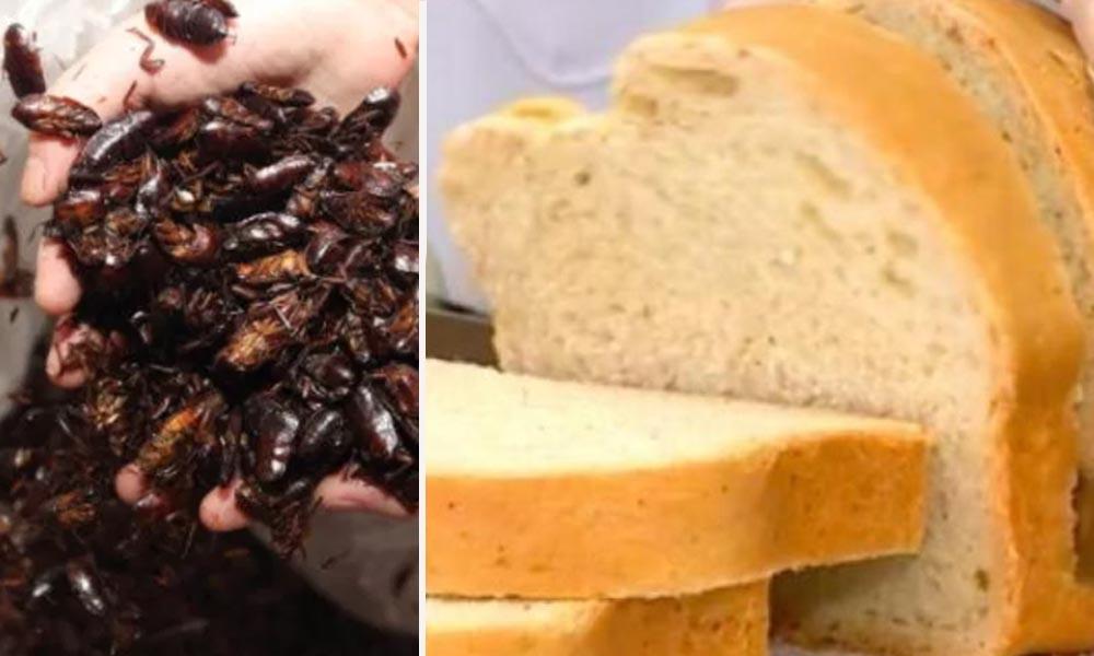 Científicos crean pan de cucarachas, afirman tiene más proteínas que la carne roja