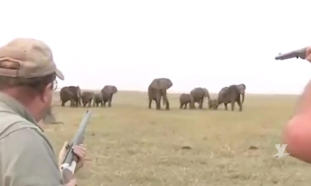 (VIDEO) Cazadores disparan a manada de elefantes y estos se defienden atacando a los agresores