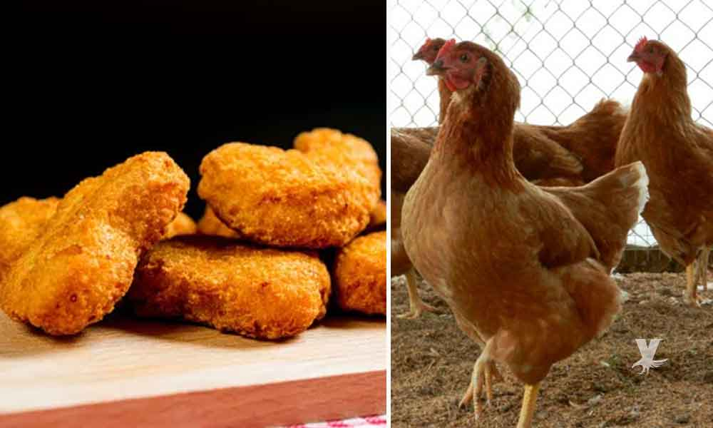 Empresa descubre como producir pollo sin matar un solo animal